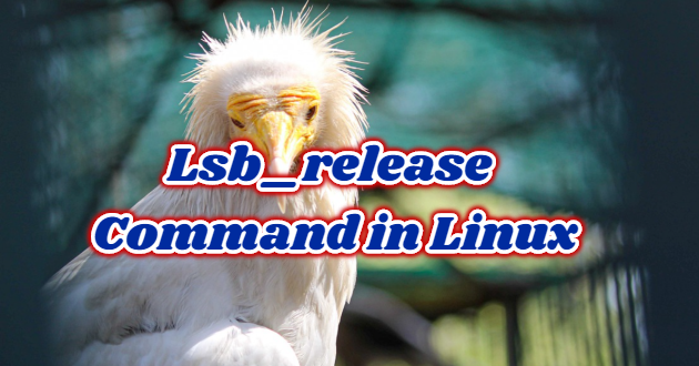 Lsb_release Command in Linux