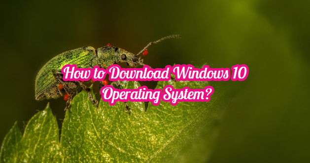 How to Download Windows 10 Operating System?